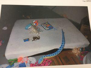 edmonton-women-who-confined-kids-to-basement-receive-8-year-sentences